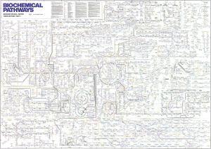 biochemicalpathways